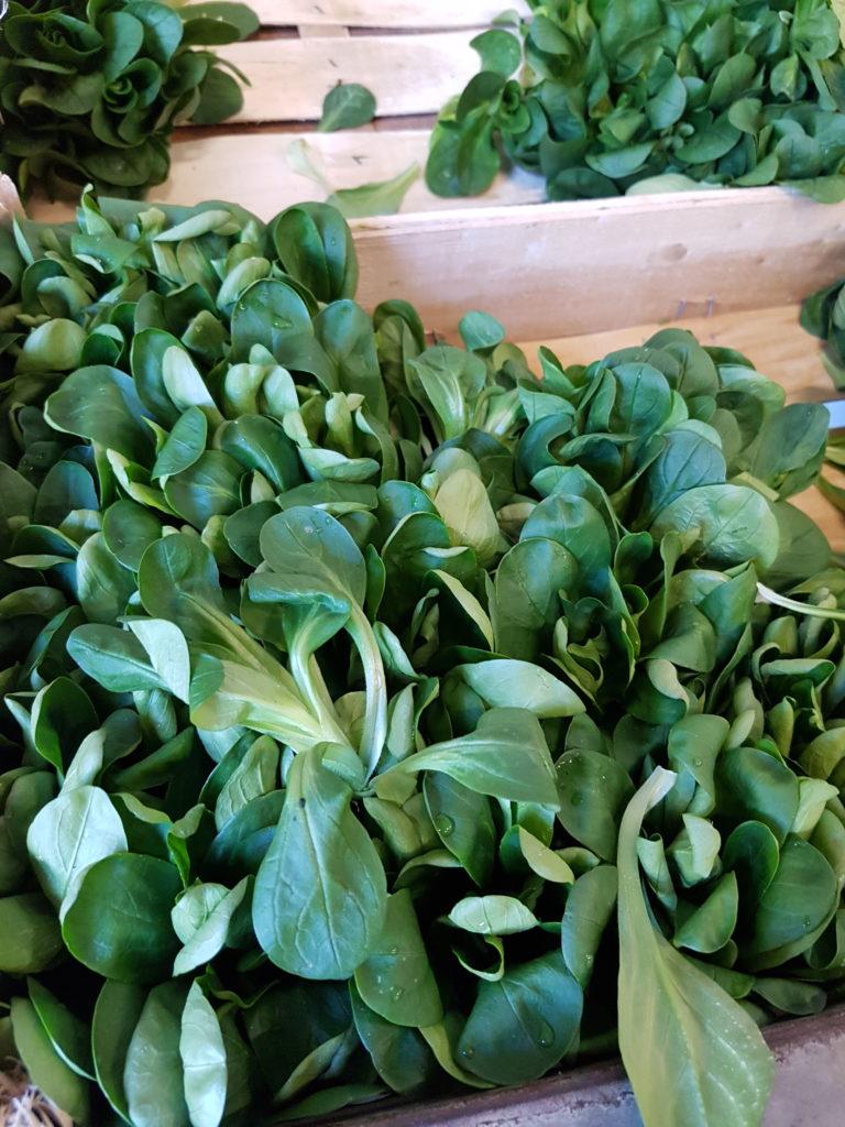 légumes locaux locavorium